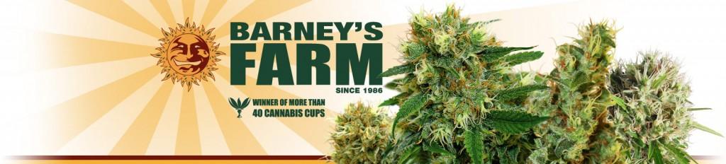 Barneys Farm Hersteller