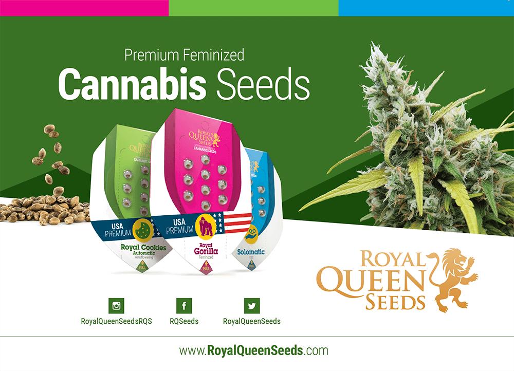Royal Queen Seeds Kat.