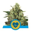 Royal Queen Seeds Medical Mass female 5er