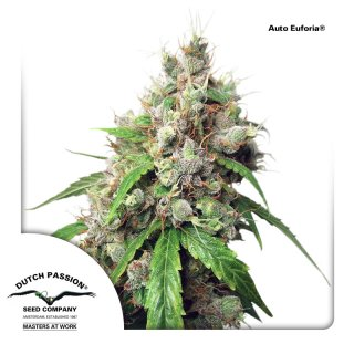 Dutch Passion Auto Euforia autofem 7er