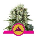 Royal Queen Seeds Critical Kush female 10er
