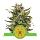 Royal Queen Seeds White Widow autofem 10er
