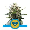 Royal Queen Seeds Royal Medic female 10er