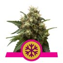 Royal Queen Seeds Ice female 5er