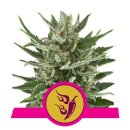 Royal Queen Seeds Speedy Chile female 10er