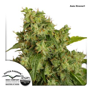 Dutch Passion Auto Xtreme autofem 7er