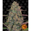 Barneys Farm Pineapple Chunk female 5er