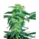 White Label Seeds White Ice regular 10er
