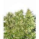 White Label Seeds Mix female 10er