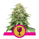 Royal Queen Seeds Critical female 5er