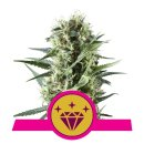 Royal Queen Seeds Special Kush #1 female 3er