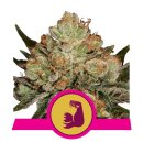 Royal Queen Seeds Hulkberry female 3er
