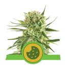 Royal Queen Seeds Royal Cookies autofem 10er