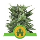 Royal Queen Seeds Royal Kush autofem 3er