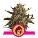 Royal Queen Seeds Royal Madre female 5er