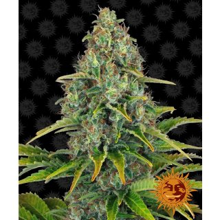 Barneys Farm Blueberry Cheese autofem 10er