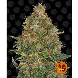 Barneys Farm Pineapple Express autofem 10er