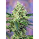 Sweet Seeds Crystal Candy female 3er