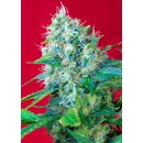 Sweet Seeds Green Poison female 3er