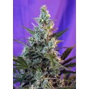 Sweet Seeds Sweet Skunk F1 Fast Version female 3er