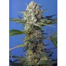 Sweet Seeds Crystal Candy F1 Fast Version female 5er