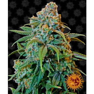 Barneys Farm Liberty Haze female 10er