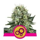 Royal Queen Seeds Bubble Kush female 10er